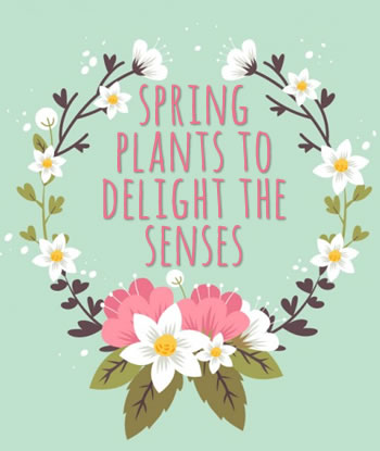 7-spring-plants-to-delight-the-senses5