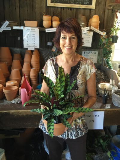 Gwen with a Logee's Rattlesnake plant