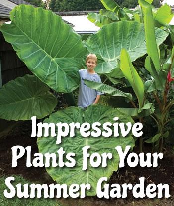logees-big-beautiful-impressive-summer-plants