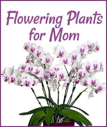 2019-flowering-plants-for-mom-home-th