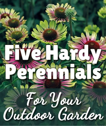 2019-hardy-perennials-home-th