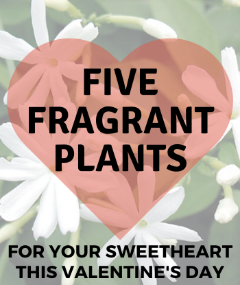 2020-Five-Fragrant-Home-Th1