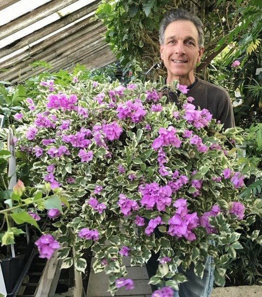 Byron Martin with Bougainvillea Blueberry Ice
