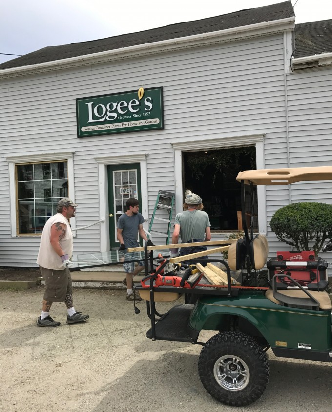 You can buy tropical, rare and fruiting plants at Logees retail store