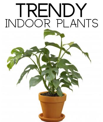 Trendy-Indoor-Plants-th-sm