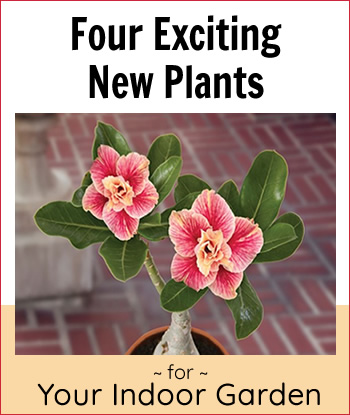 exciting-new-indoor-plants-home-th