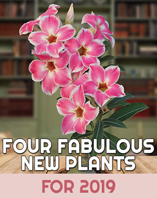 four-fab-plants-home-thumb