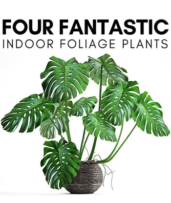 four-fantastic-indoor-foliage-plants-2