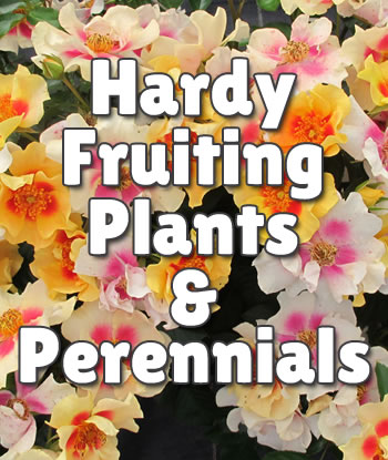 hardy-fruiting-plants-and-perennials-th1