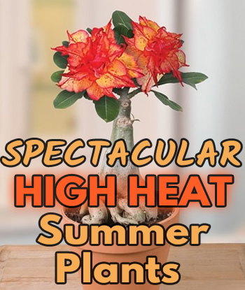 high-heat-summer-plants-home-th1