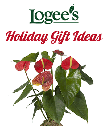 Holiday gift ideas from Logee's