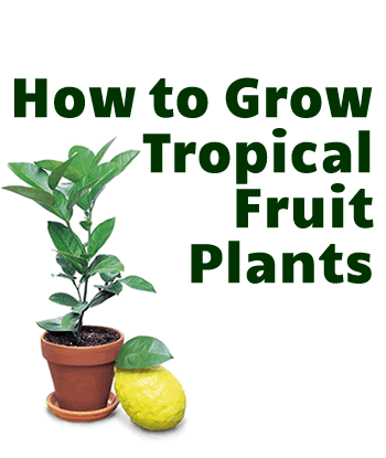 how-to-grow-tropical-fruit-plants
