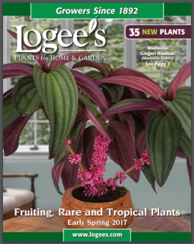 Logees 2017 Spring Catalog sneak peek