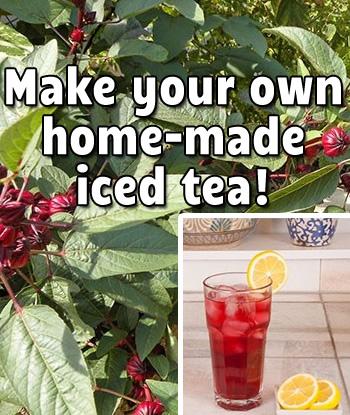make-home-made-iced-tea