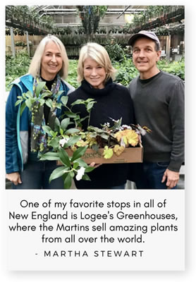 Martha Stewart returns to Logee's!