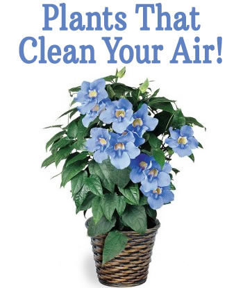 plants-that-clean-air-in-your-home