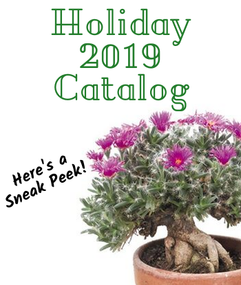 sneak-peak-holiday-2019-home-th