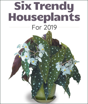 trendy-houseplants-2019-th