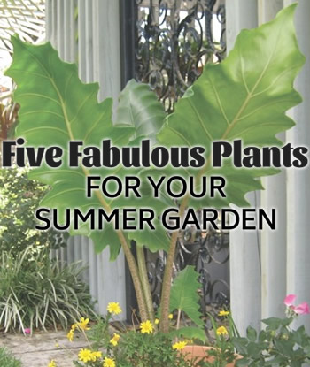 tropical-plants-for-summer-garden-featured