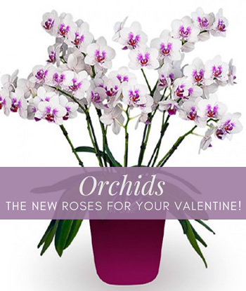 vday-orchids-home-thumb